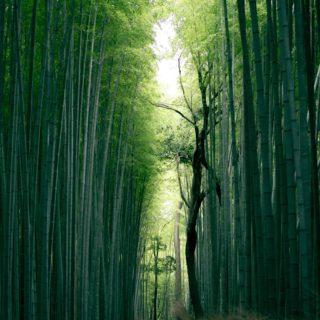 Iyashi Dôme foret japonaise